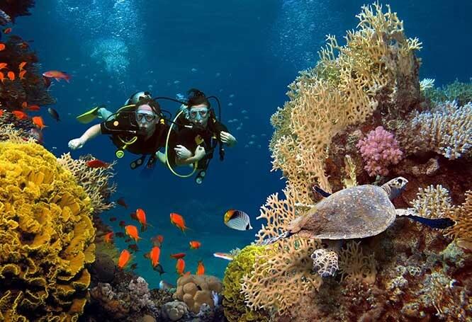 Explora tu lado aventurero en el Caribe
