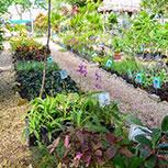 Botanical Garden Dr. Alfredo Barrera Marín