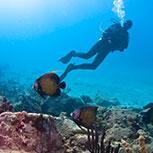 Dive Safaris