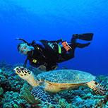 Dive in Cozumel