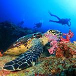 Dive Adventures